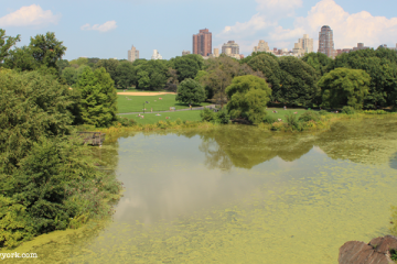 Turtle Pond, Central Park
