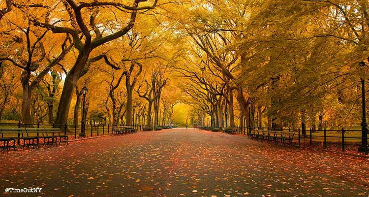 Central Park en automne NY